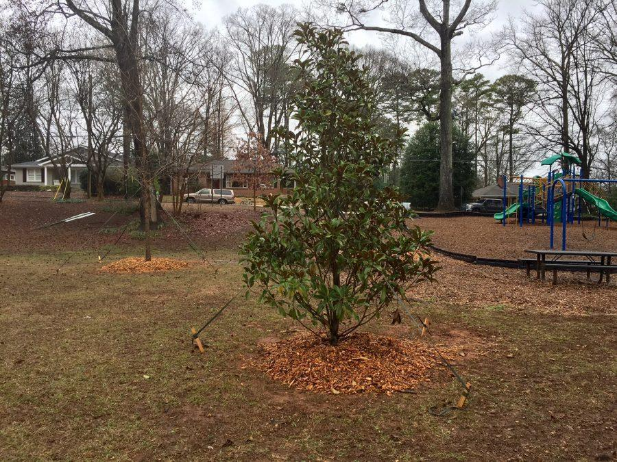 Decatur Construction strikes local tree ecosystems