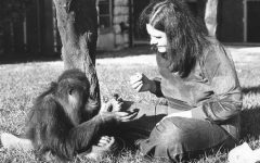 Sign language speaking orangutan dies at Zoo Atlanta