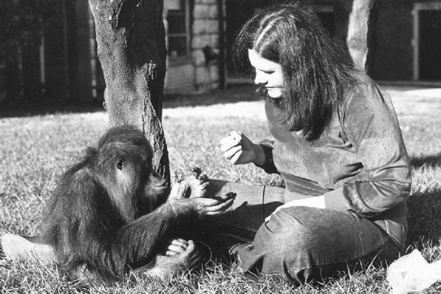 Sign language speaking orangutan dies at Zoo Atlanta